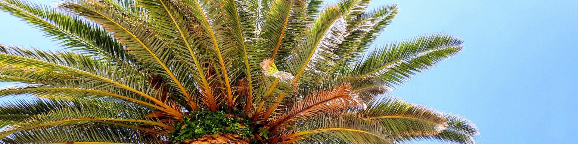 Palm banner